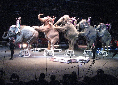 Ringling Brothers Circus (Amy n Rob)