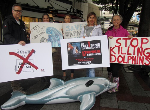 dolphin demo