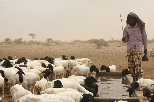 Oxfam-funded drinking hole in East Africa