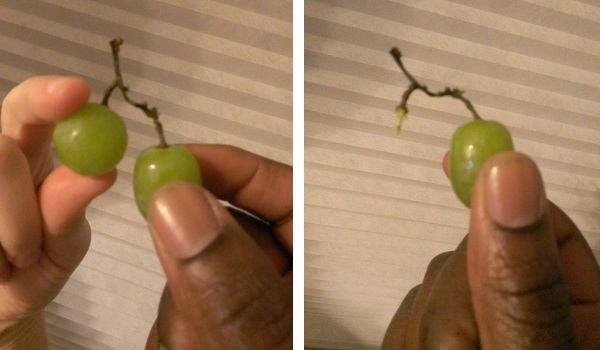 grape wishbone