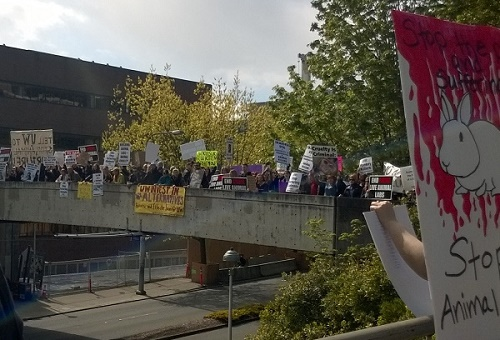 bridge with protesters